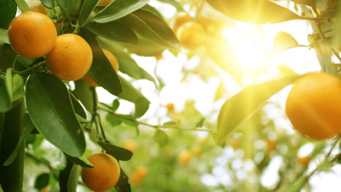 citrus sustainability